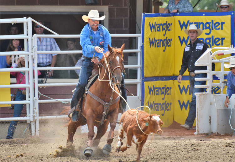 Image of a cowboy roping a calf at the Calgary Stampede rodeo