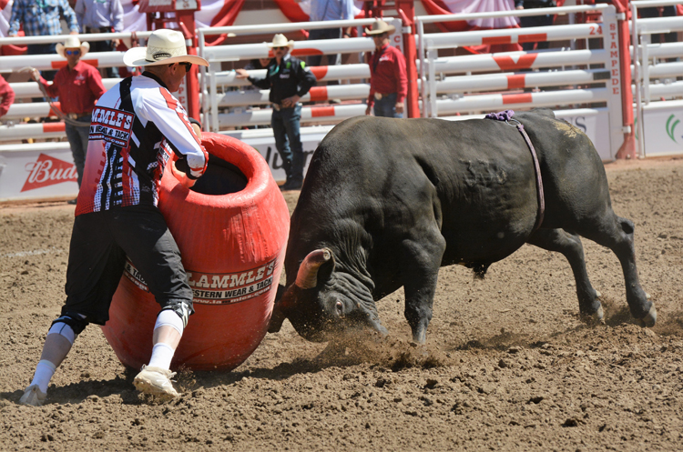 Image of a rodeo clown and a bull at the Calgary Stampede rodeo
