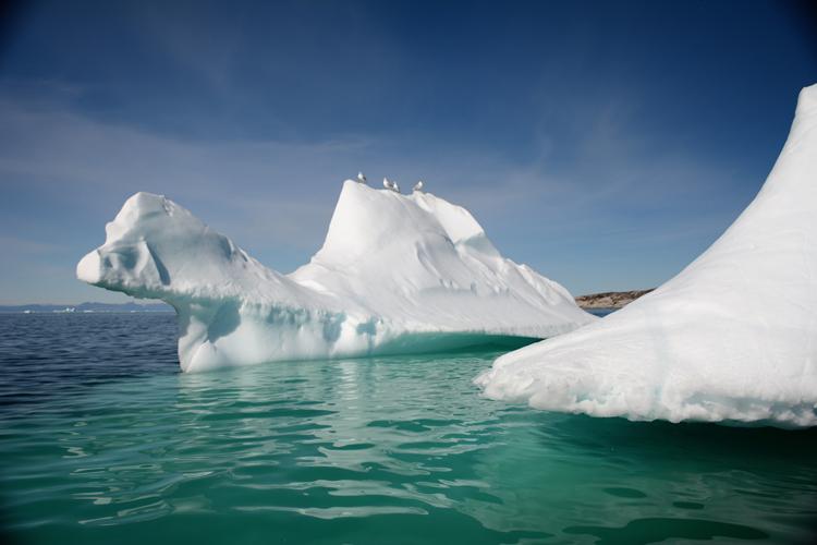Image of an iceberg that looks like a camel - iceberg pareidolia test