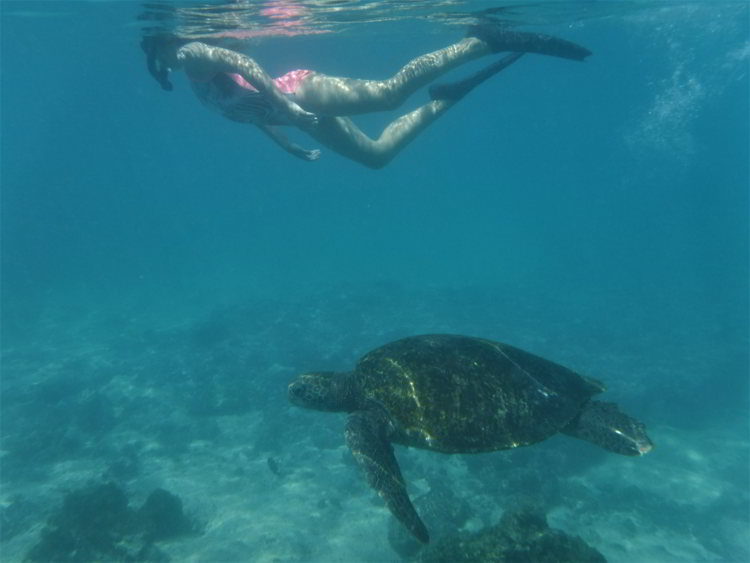 An image of a girl snorkeling with a giant sea turtle in the Galapagos Islands of Ecuador.