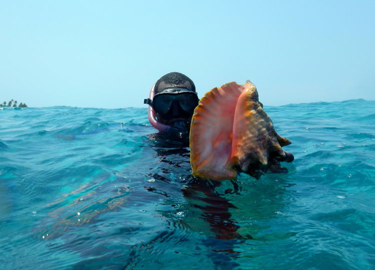 Image of a snorkeler holding a conch shell he found while snorkeling in Belize in South Water Caye Marine Reserve