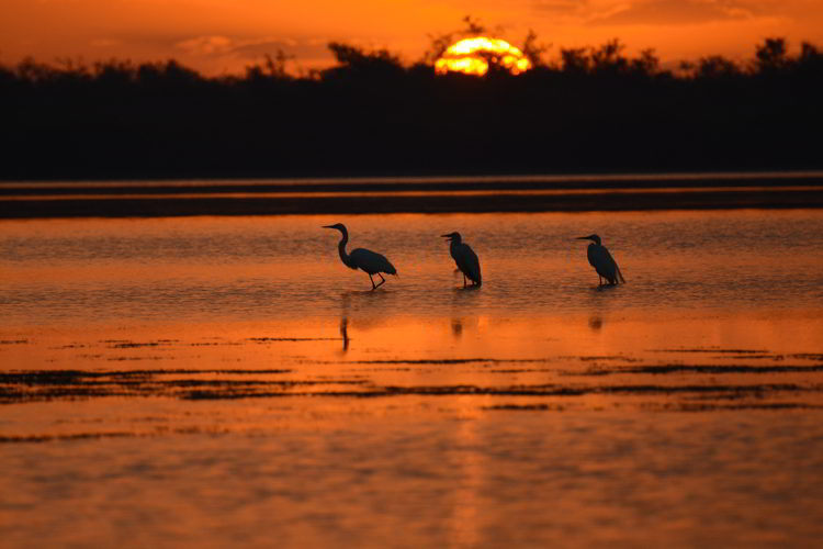 An image of a golden sunrise and several white ibis birds in the Crooked Tree Wildlife Sanctuary in Belize