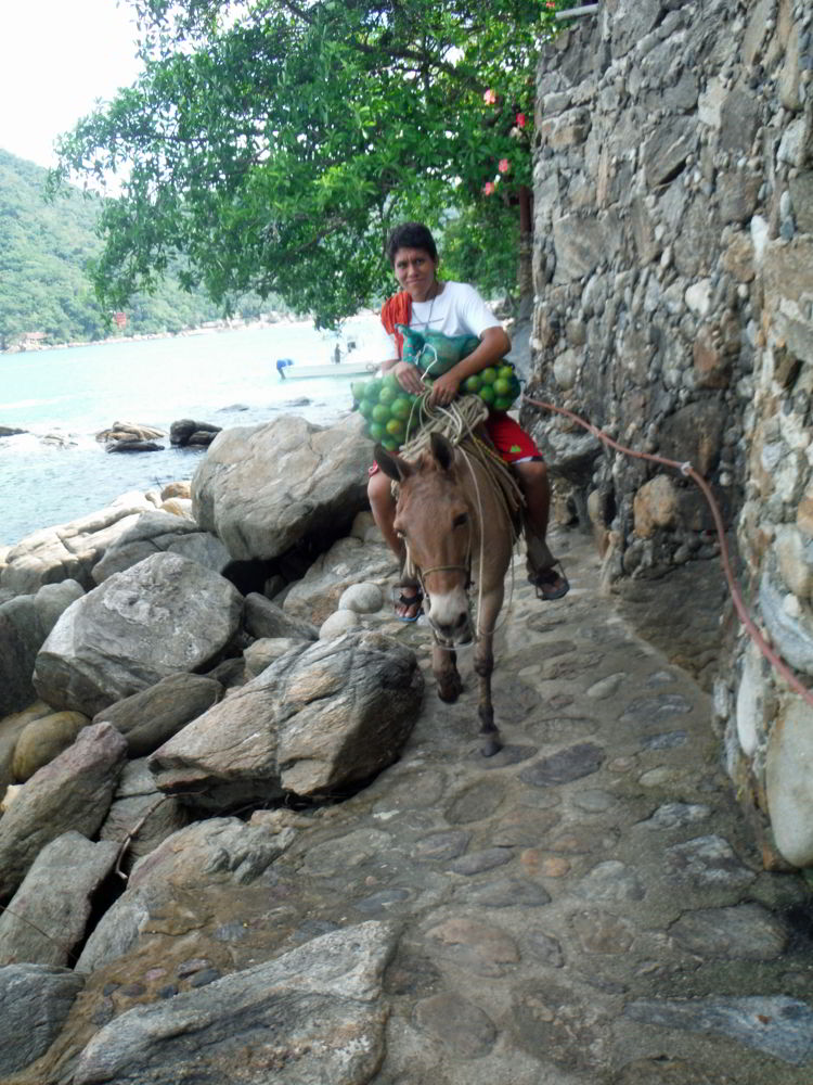 An image of a person bringing supplies to Casa Pericos on a burro. Photo by DEBBIE OLSEN