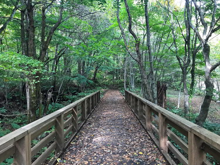 An image of the trail in Oirase Gorge near Aomori, Japan - Lake Towada and Oirase Gorge