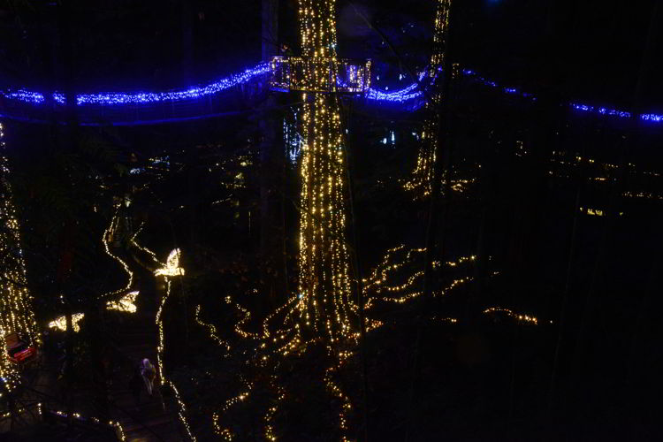 An image of the lighted canopy walk at Capilano Suspension Bridge Park in Vancouver, BC Canada - Vancouver Christmas Lights