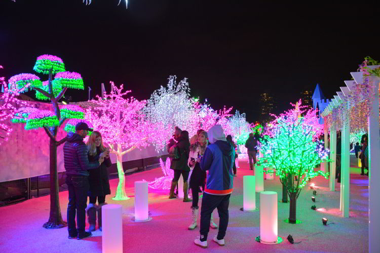 An image of the colorful lighted forest at the Aurora Winter Festival in Vancouver, BC Canada. Vancouver Christmas Lights