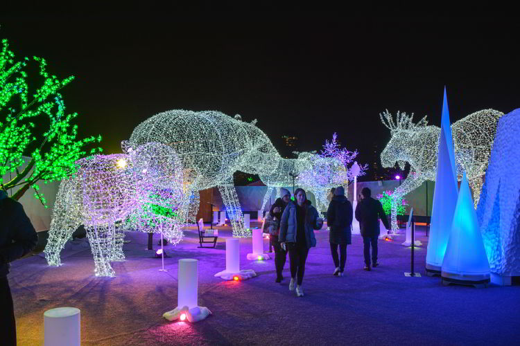 An image of the large lighted animals at the Aurora Winter Festiival in Vancouver, BC Canada. Vancouver Christmas Lights