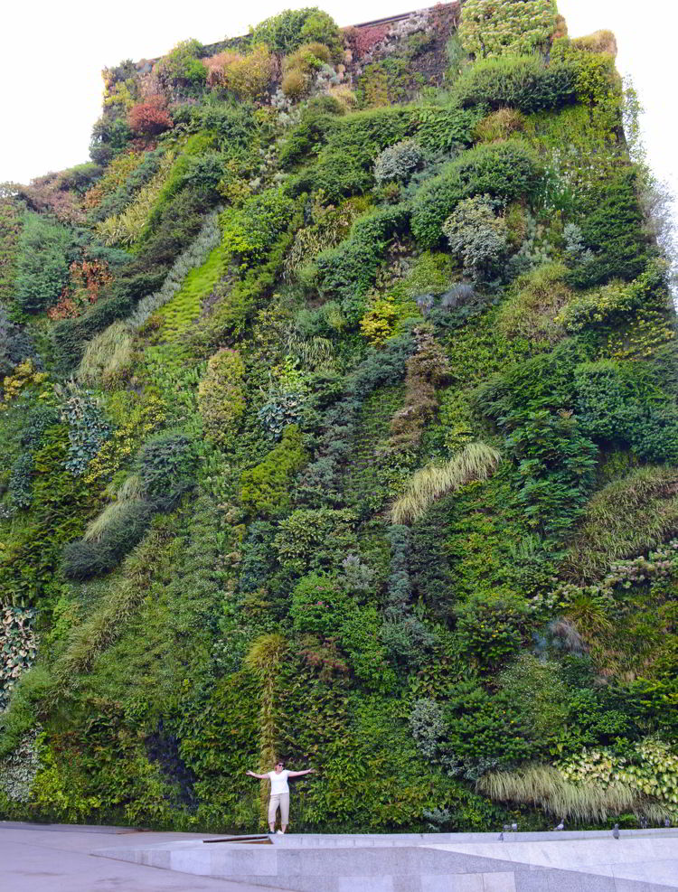 An image of a living wall covered with plants in Madrid, Spain - Free things to do in Madrid.