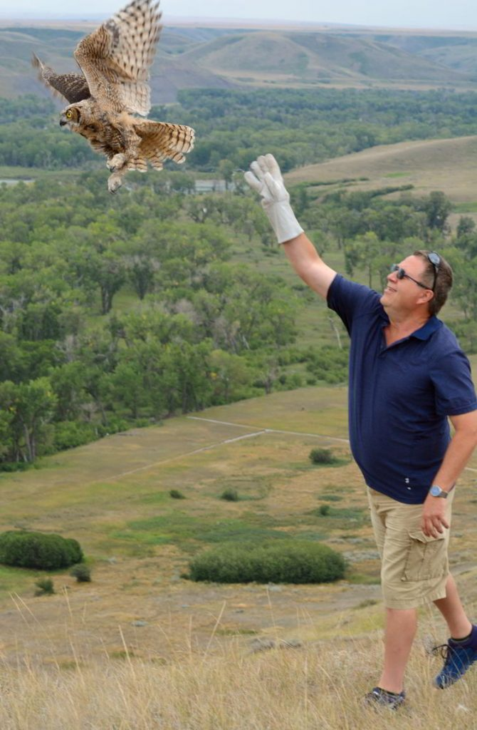 An image of a man releasing a Great Horned owl near Lethbridge, Alberta - Alberta Birds of Prey Centre.