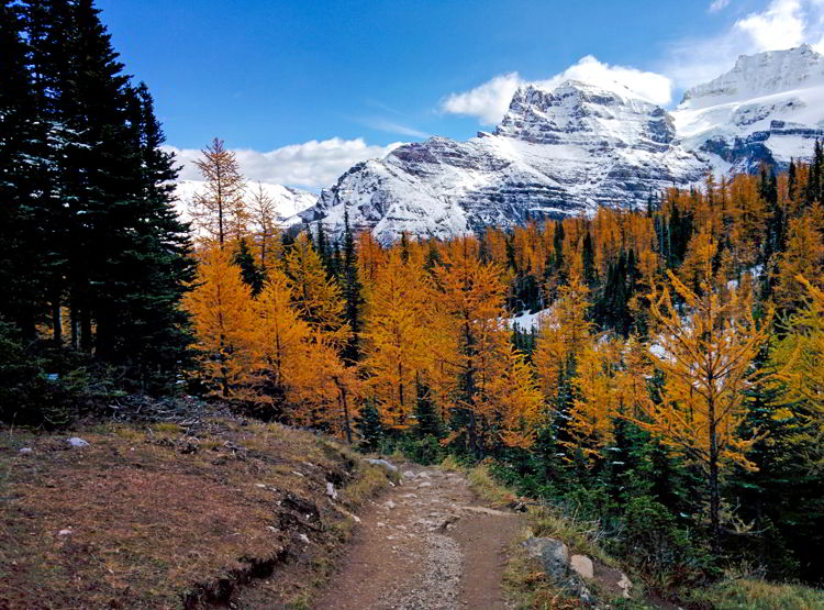 An image of the trail near Sentinel Pass in Banff National Park during larch season.