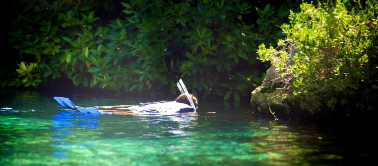 An image of a person snorkeling.