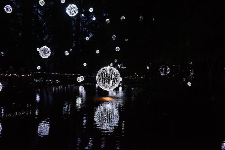 An image of a light display over a pond at Canyon Lights at the Capilano Suspension Bridge in Vancouver, BC, Canada. Christmas lights in Vancouver.