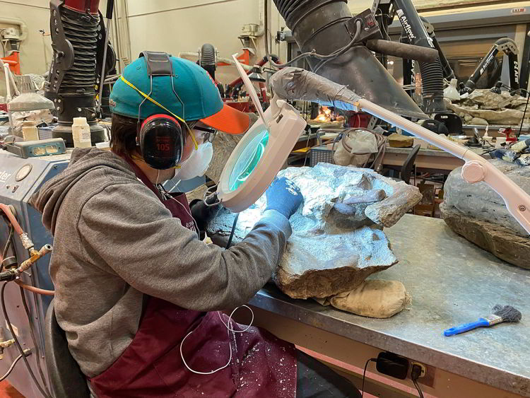 An image of a person working in the preparation lab at the Royal Tyrrell Museum in Drumheller, Alberta.