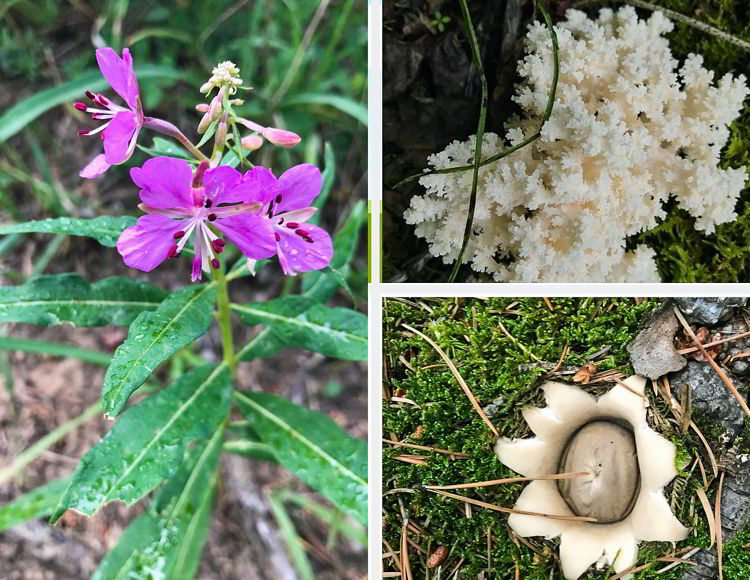 An image of wildflowers and fungi on the Heart Mountain Horseshoe hike near Canmore, Alberta.