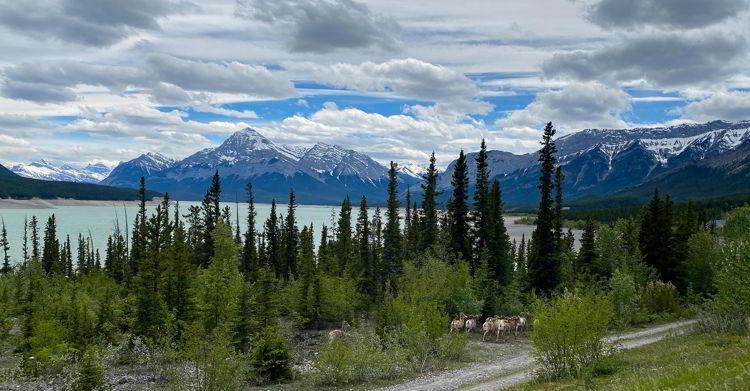 An image of Abraham Lake in Alberta, Canada. Alberta road trips.