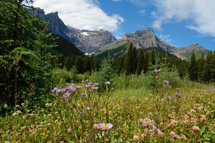 An image of Peter Lougheed Provincial Park in Kananaskis, Alberta, Canada. Kananaskis Trail - Alberta Road trips