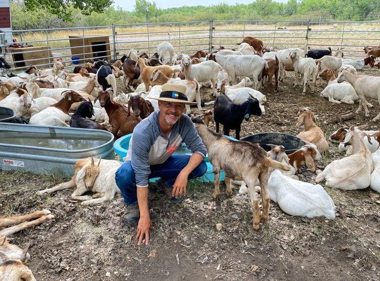 n image of a goat herder in Medicine Hat, Alberta, Canada.