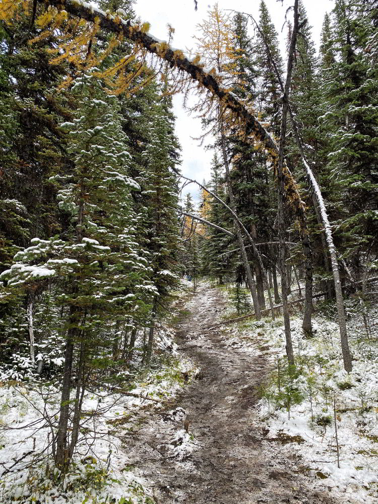 An image of a slippery winter hiking trail near Canmore, Alberta.